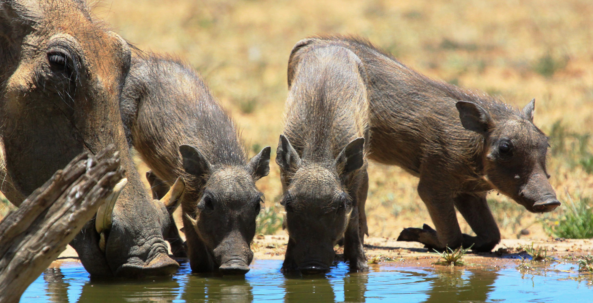 Namibia-Okonjima-Wildlife