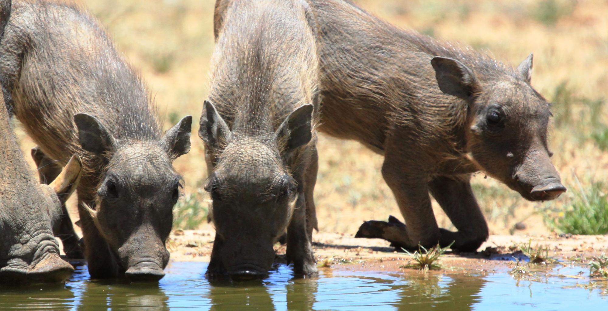 Namibia-Okonjima-Bush-Suite-Wildlife