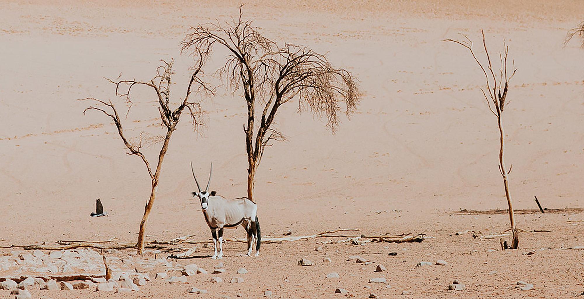 Namibia-Wolwedans-Dune-Camp-Wildlife
