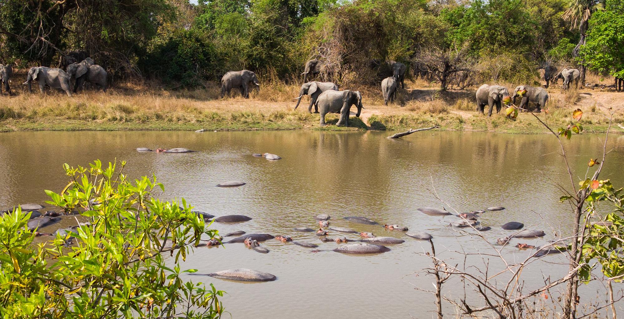 Zambia-Luwi-Camp-Wildlife-Elephant
