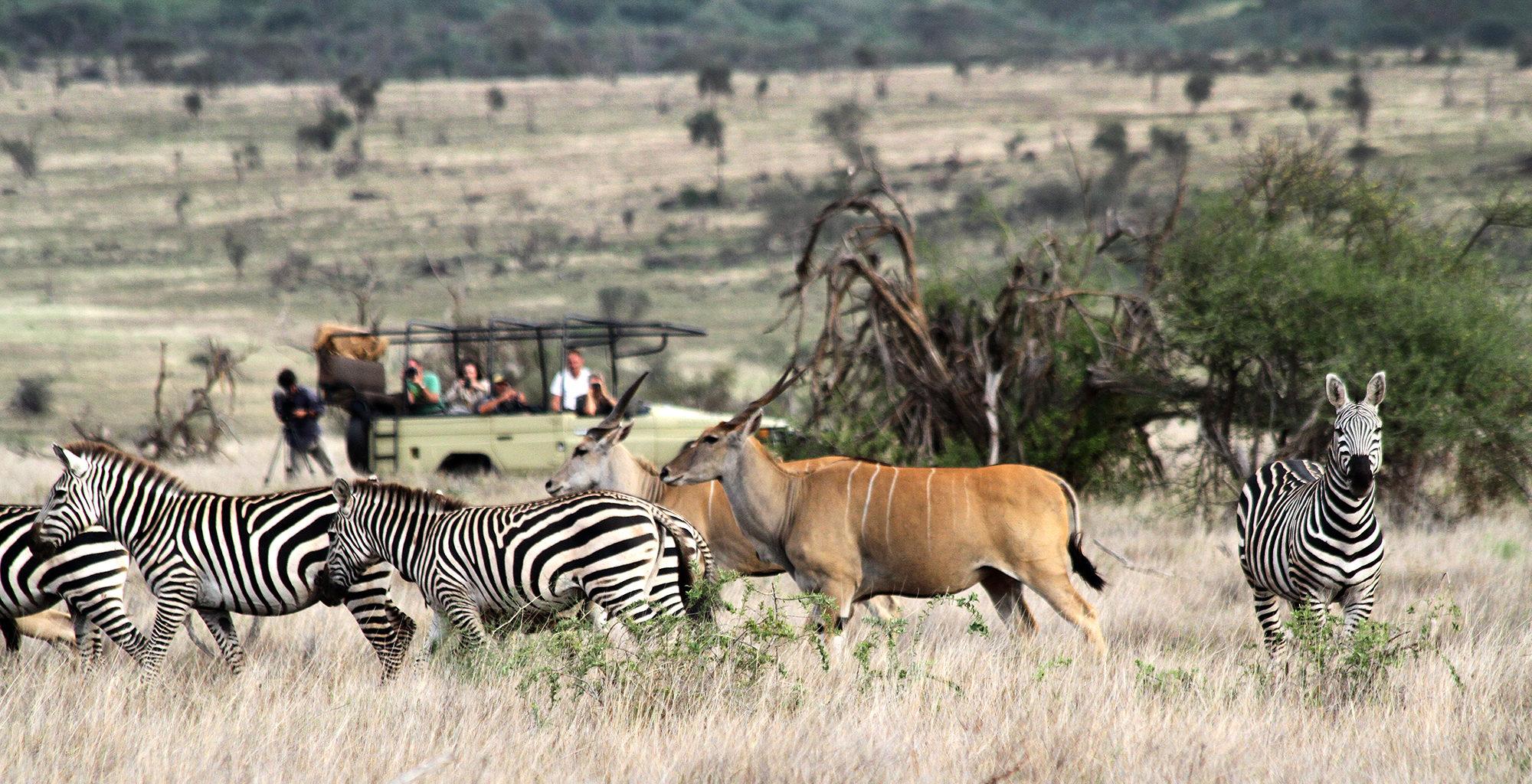 Tanzania-West-Kilimanjaro-Wildlife