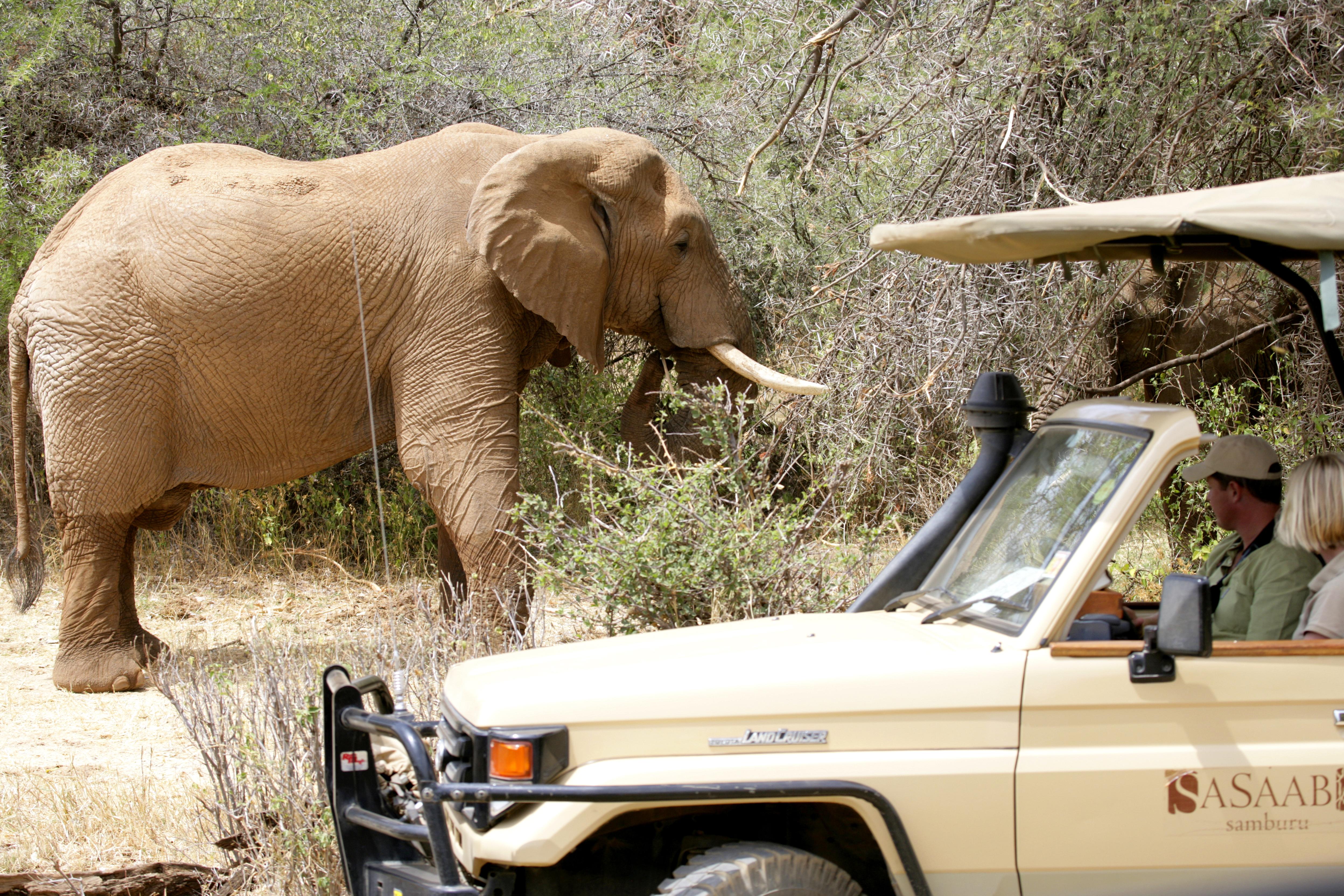 Sasaab Kenya Game Drive