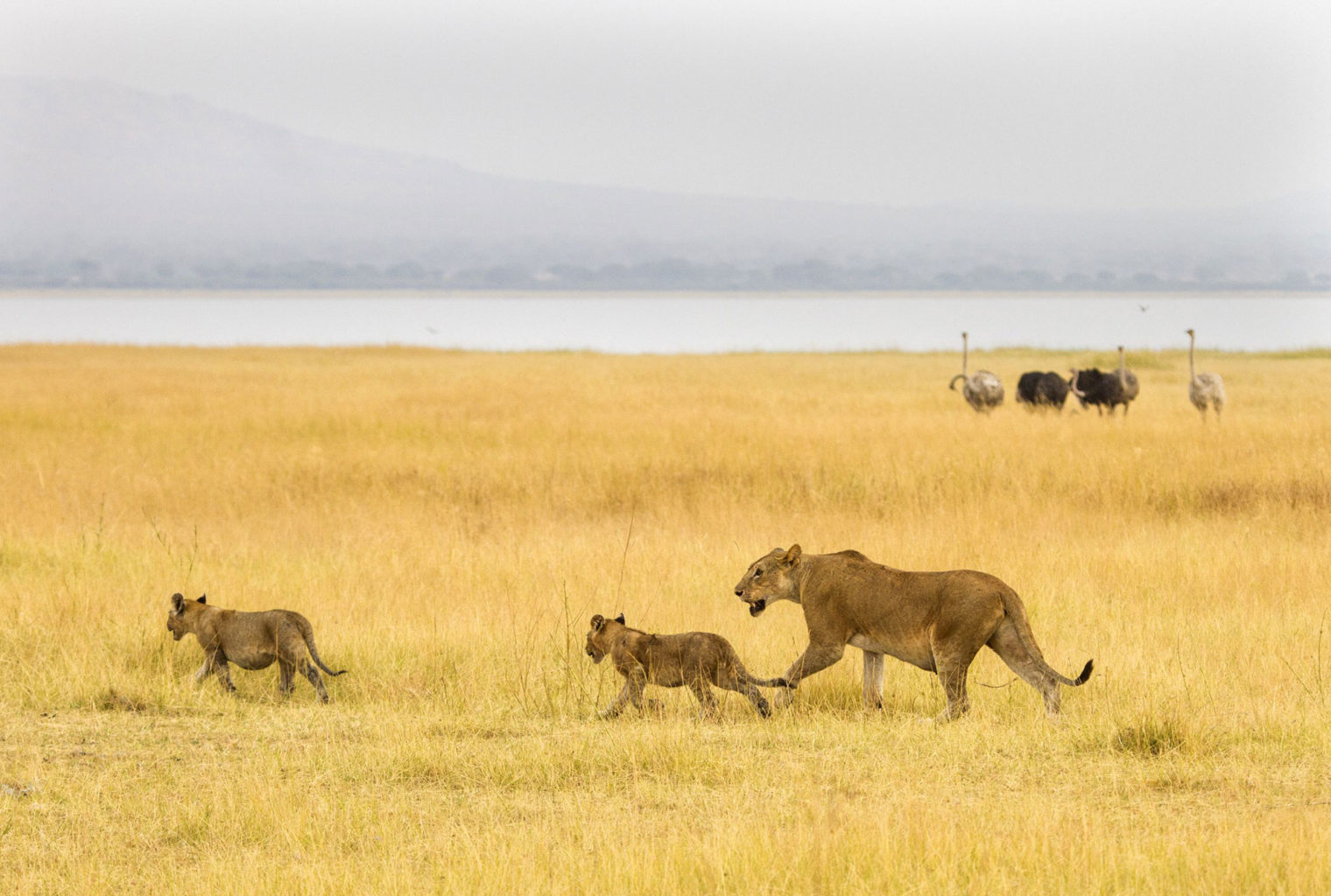 Little Chem Chem Tanzania Wildlife