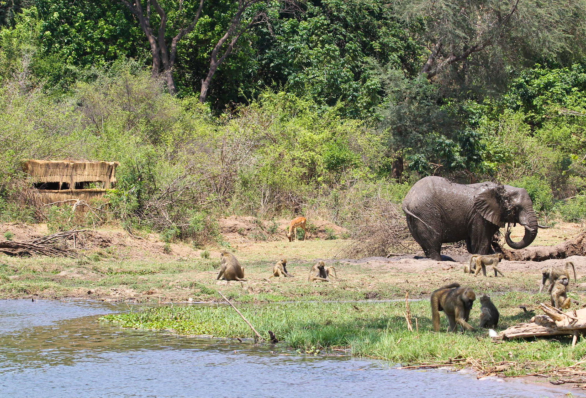 Chiawa Camp Zambia Wildlife