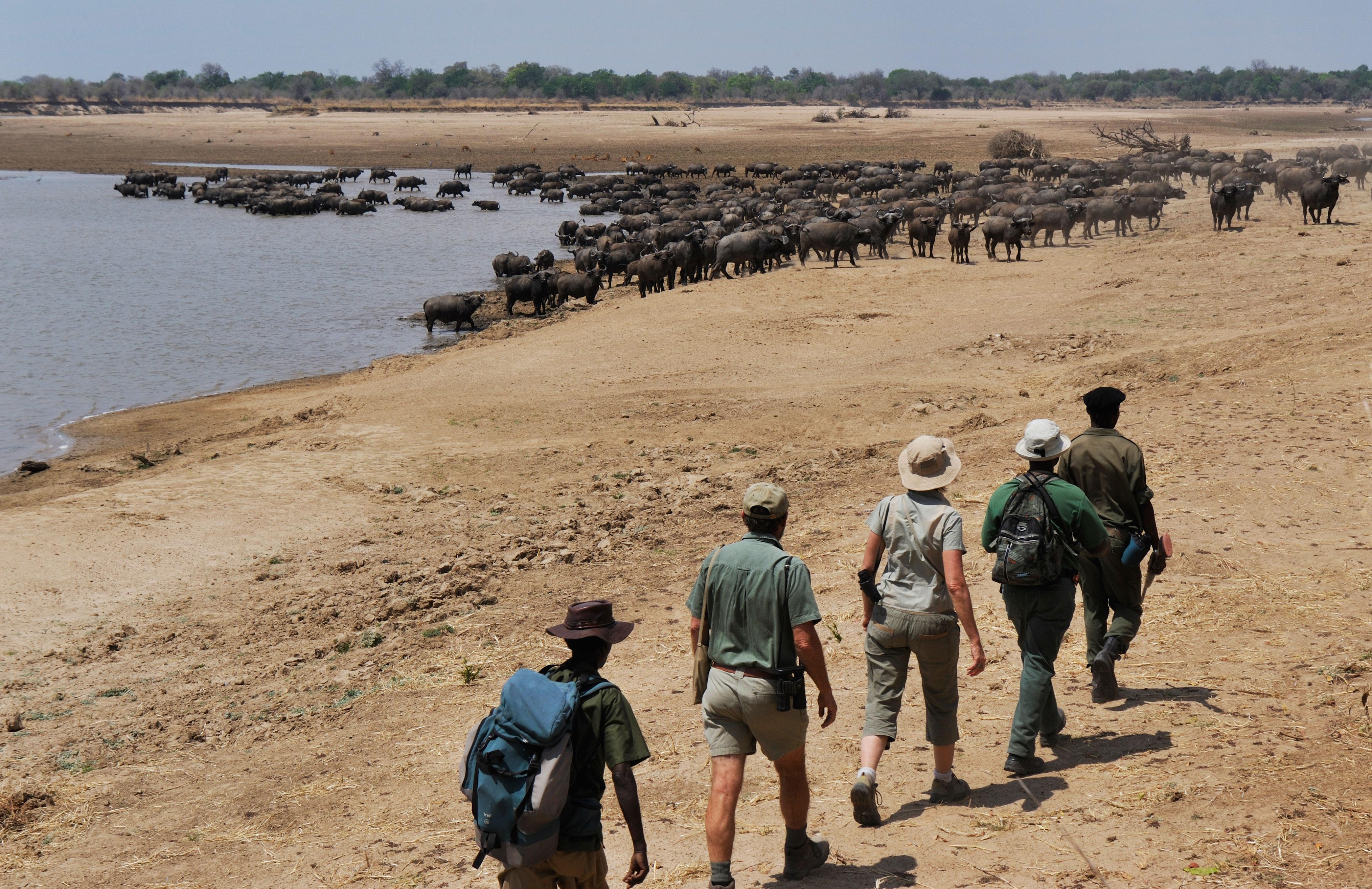 Tafika-camp--Zambia-wildlife
