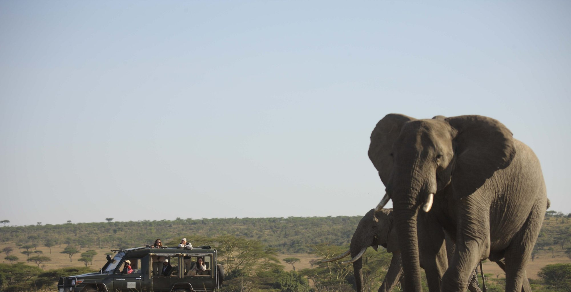 Kicheche-valley-camp-elephant