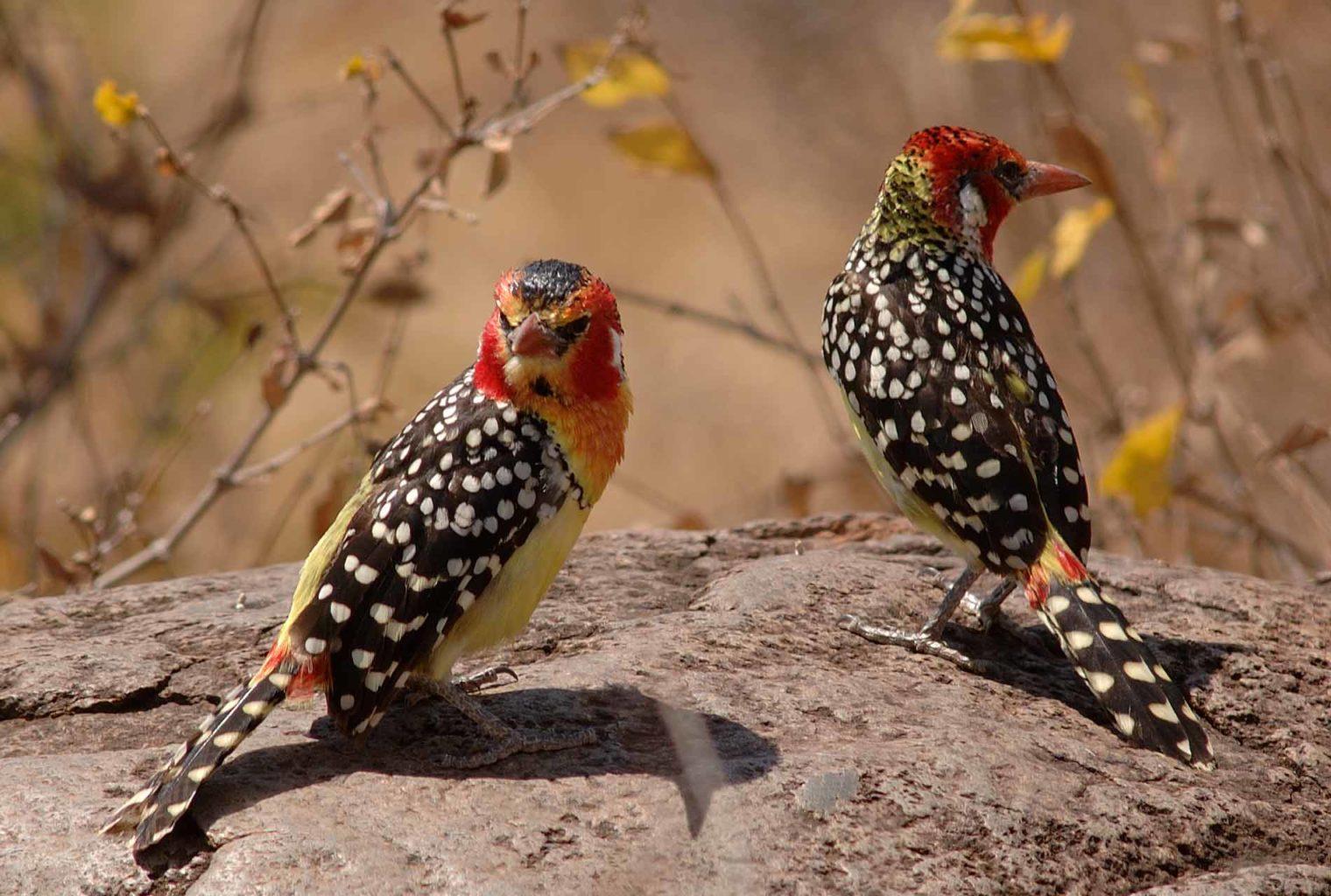 Kuro Tarangire Tanzania Wildlife