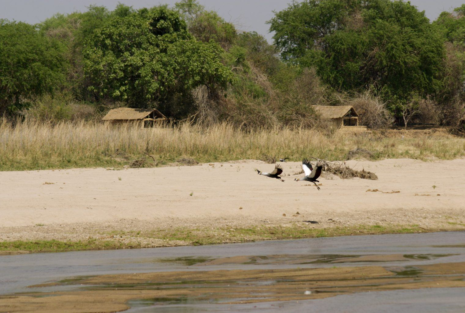 Kutandala Camp Zambia Wildlife