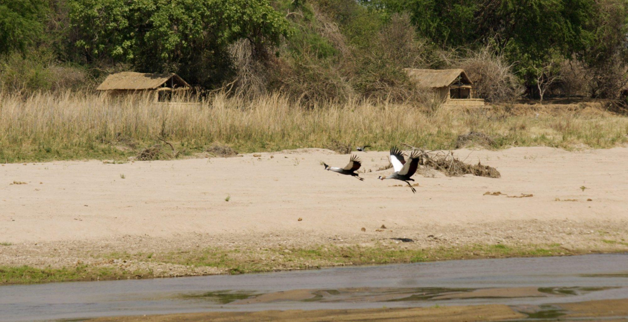 Zambia-Kutandala-Wildlife