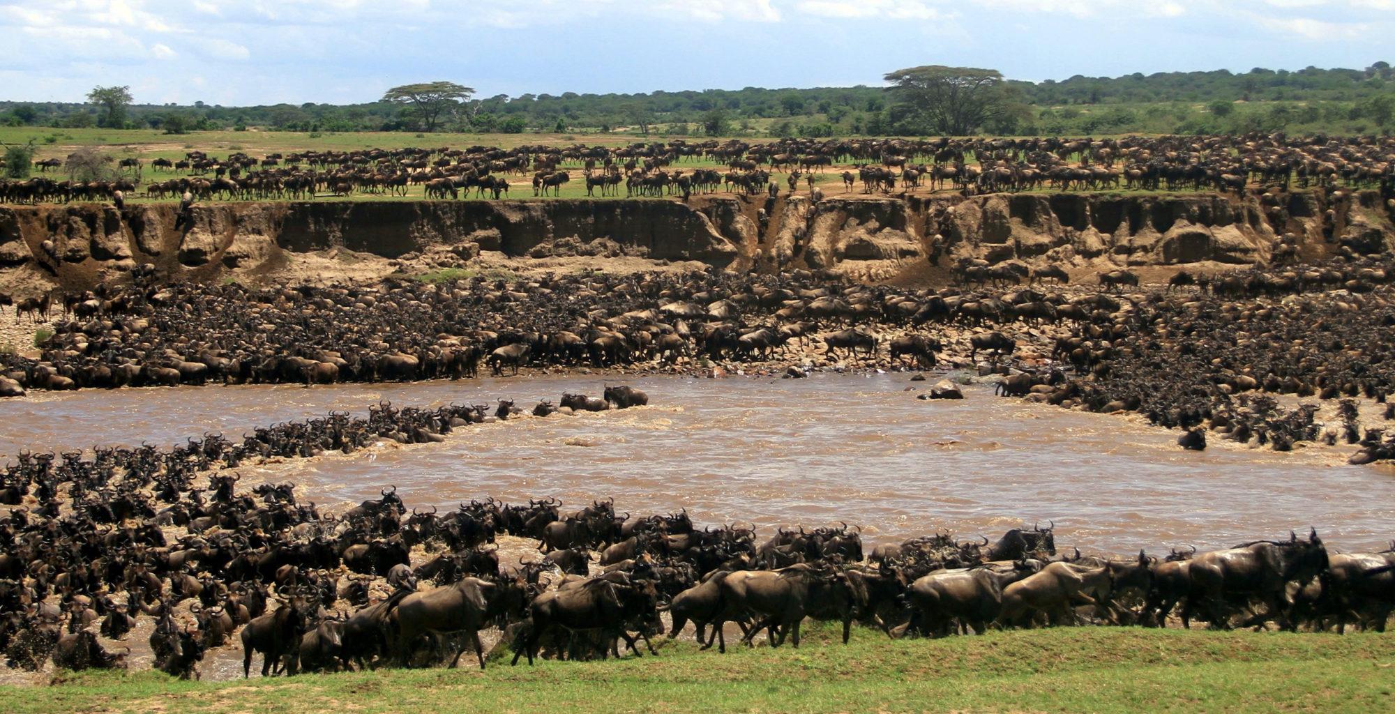 Tanzania-Legendary-Serengeti-Camp-Wildebeest