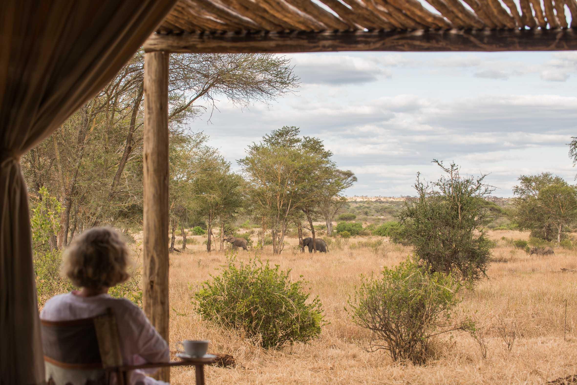 Kuro Tarangire Tanzania Wildlife Watching