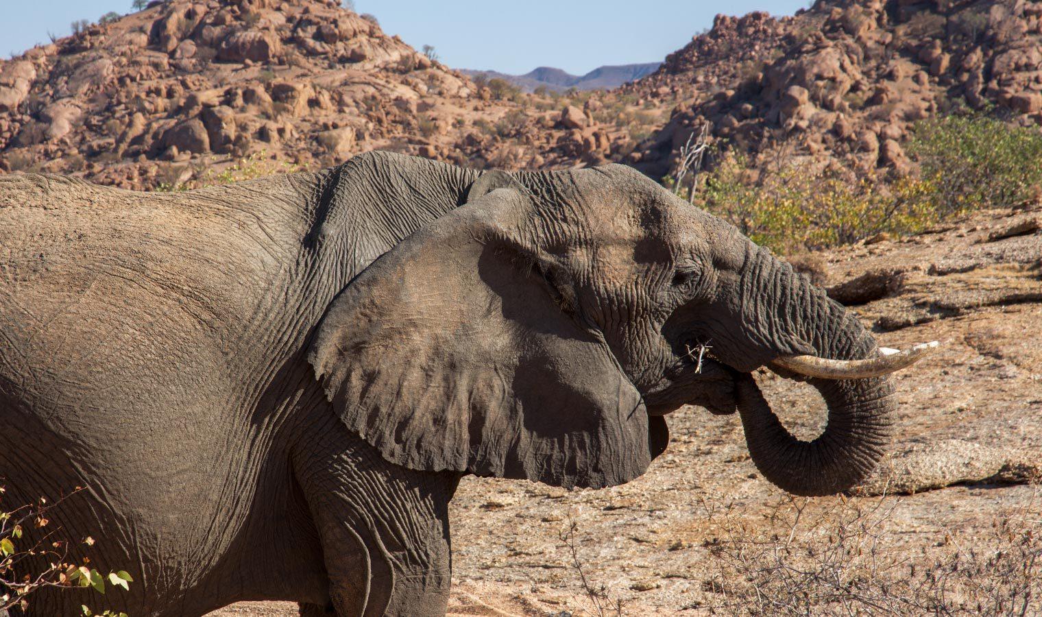 Camp Kipwe Namibia Elephant