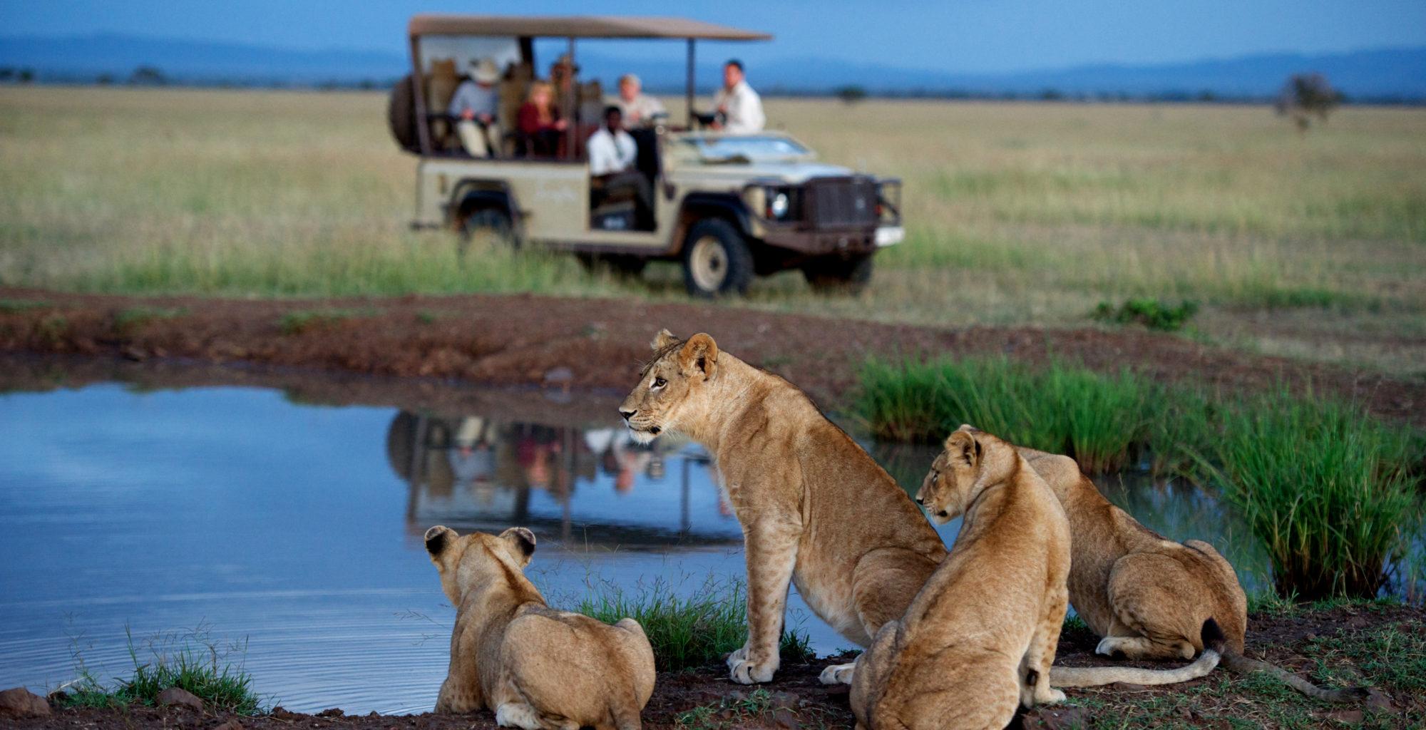 Tanzania-Singita-Serengeti-House-Game-Drive-Lions
