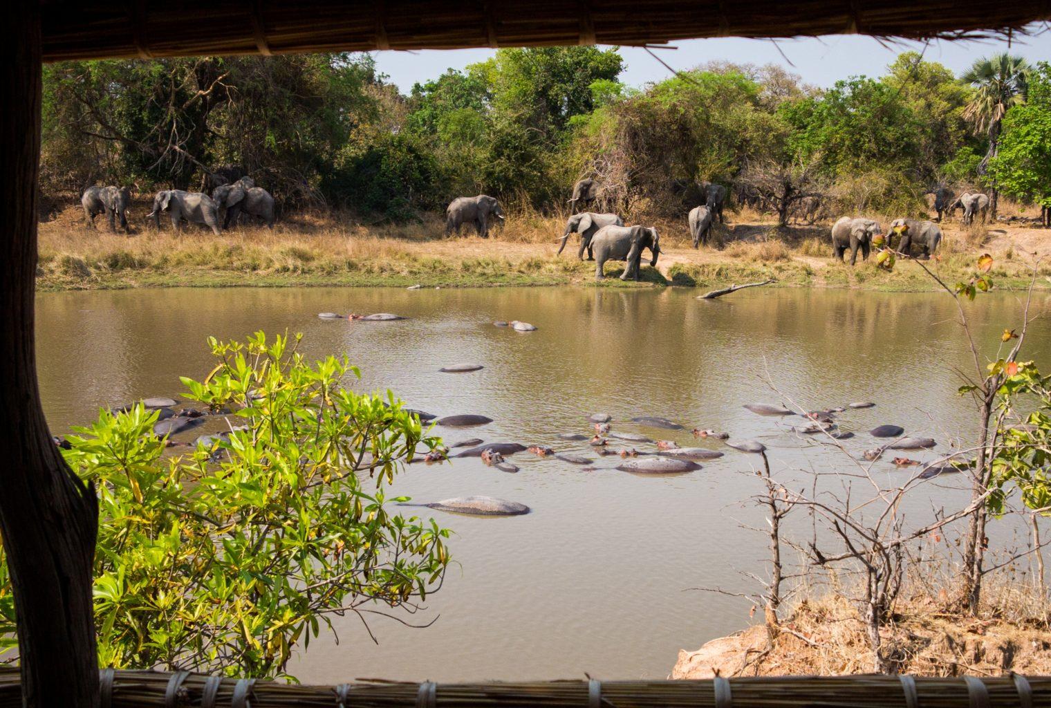 Luwi-Zambia-Wildlife