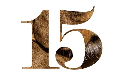 15 Years, 2014 (Anniversary)