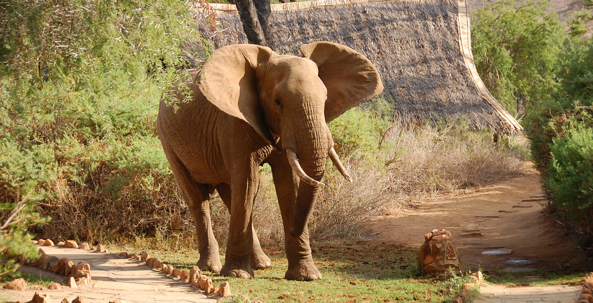 Kenya-Galdessa-Elephant-in-Camp