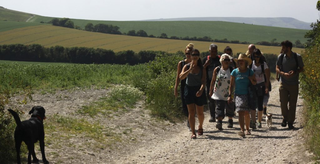 Journeys by Design Team Foraging near Firle in the South Downs