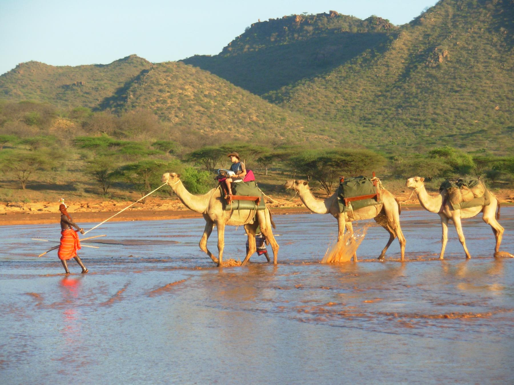 Karisia Safaris Camel