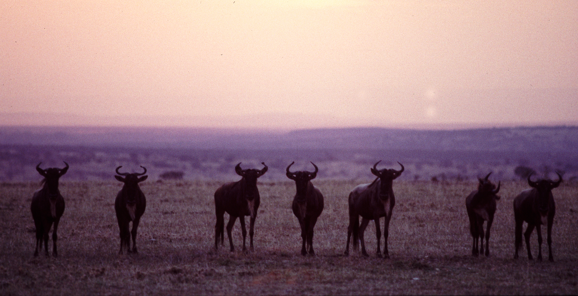 Kenya-Karisia-Safaris-Wildlife