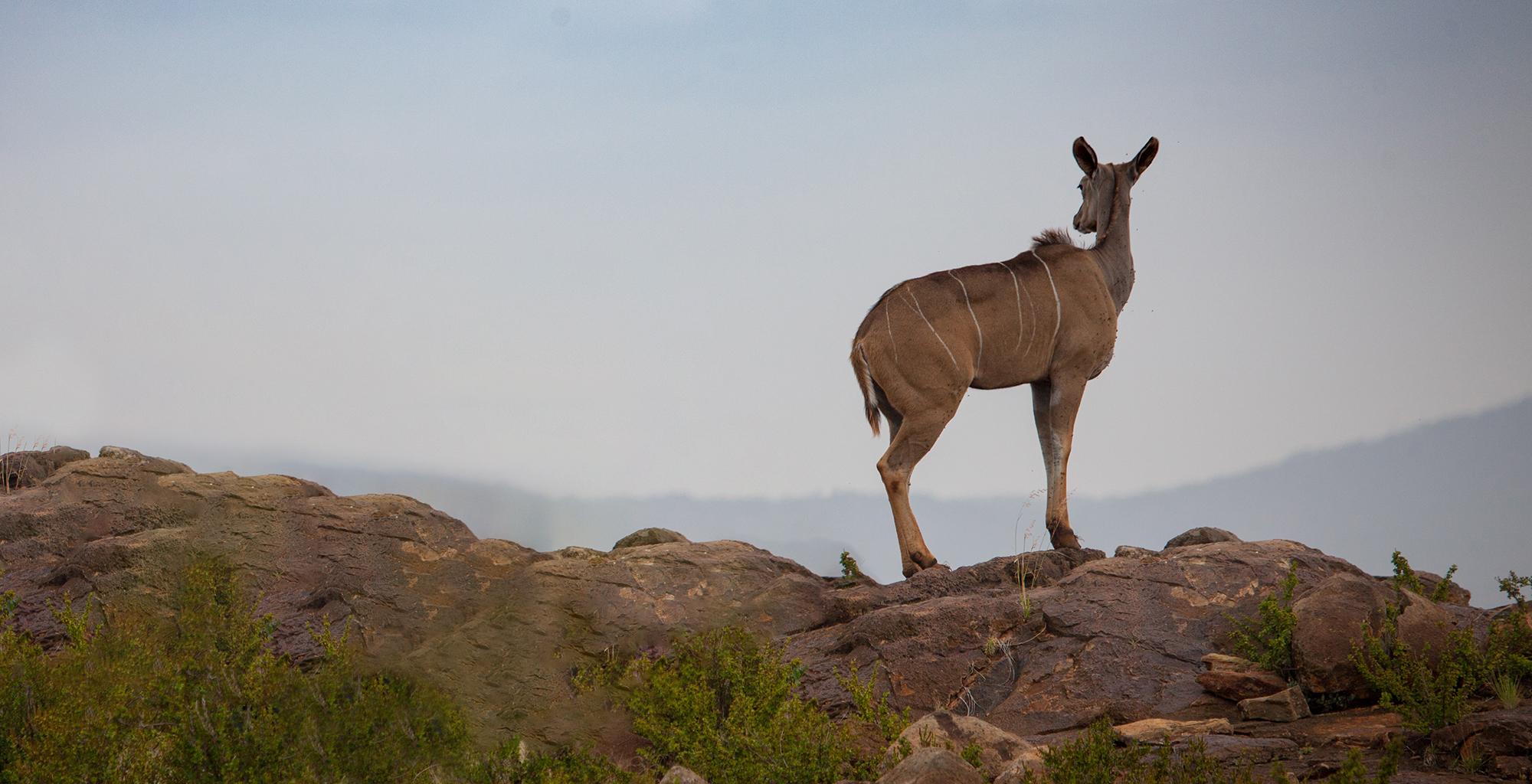 Kenya-Loisaba-Tented-Camp-Wildlife