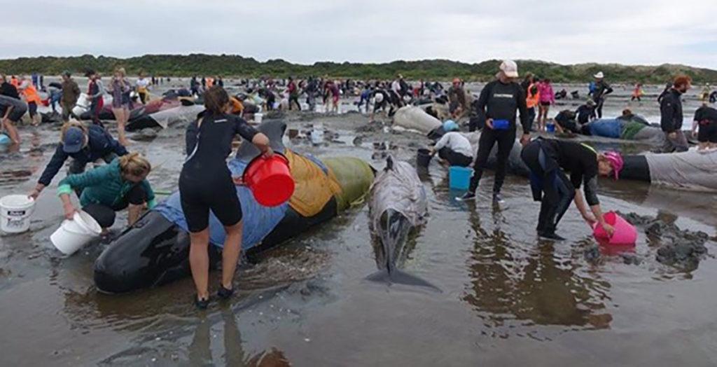 Jess-Jones-saving-pilot-whales