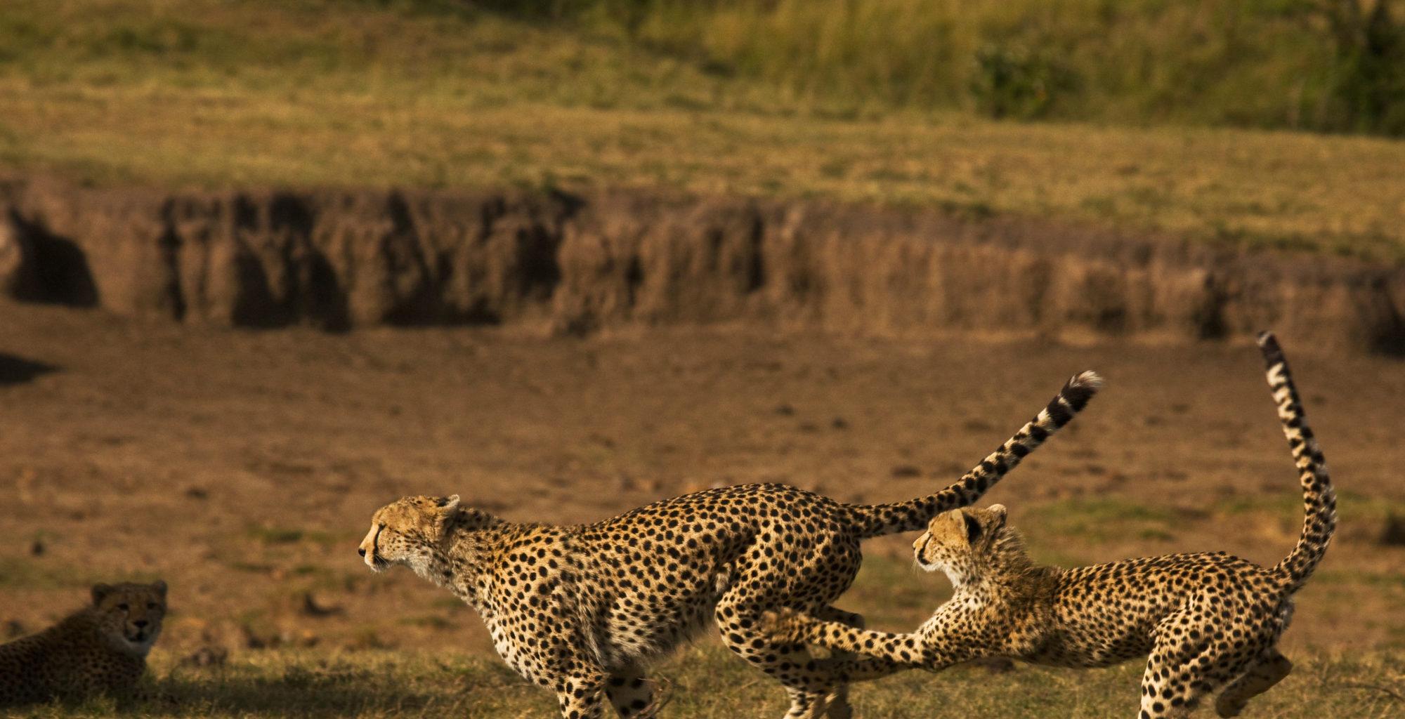 Mara Expedition Camp Wildlife Kenya