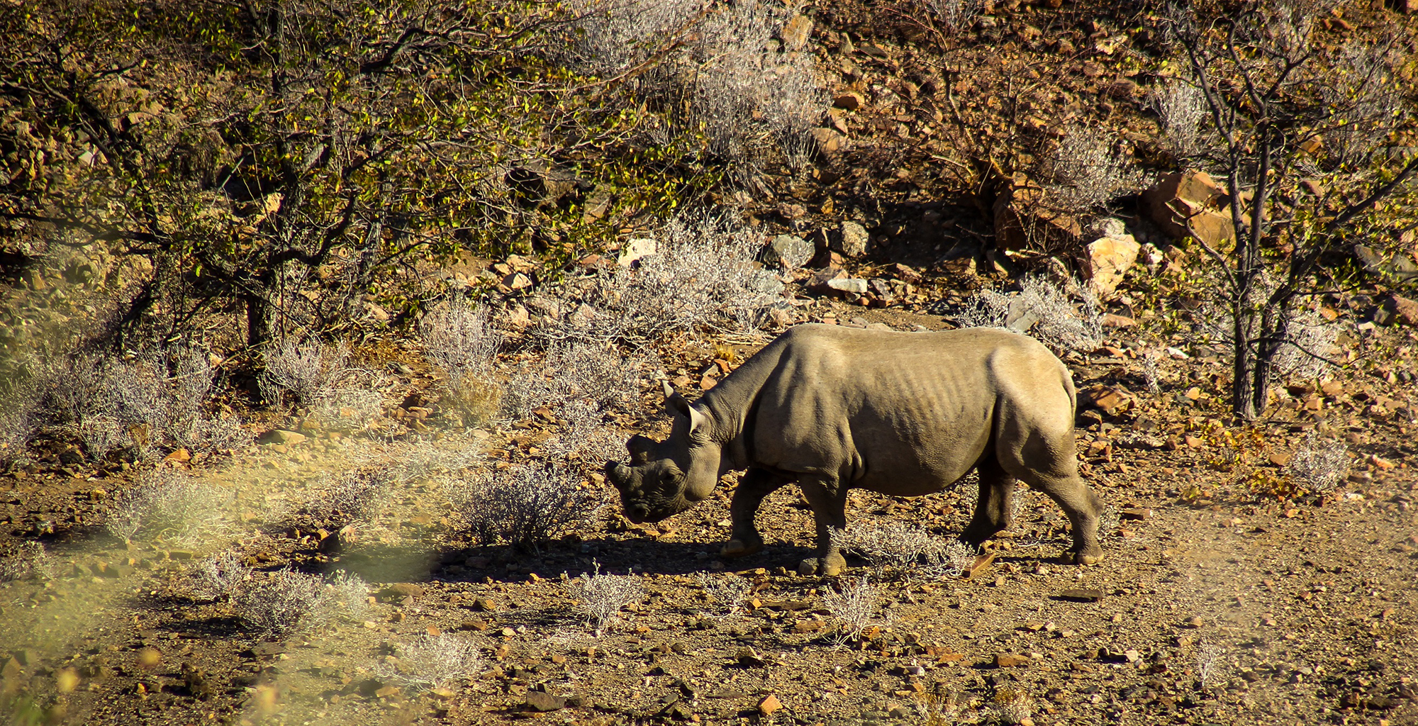Namibia-Huab-Under-Canvas-Rhino