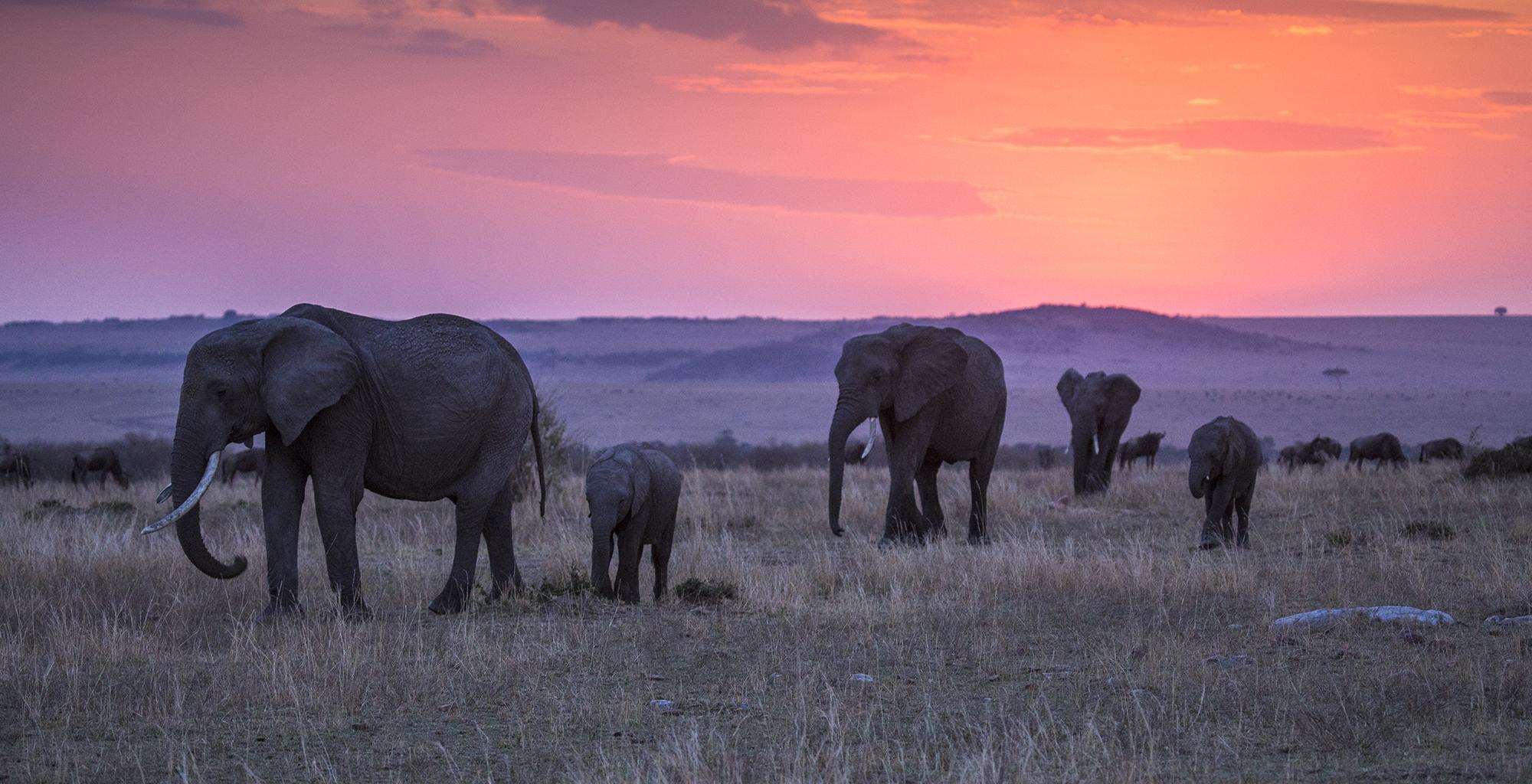 Kenya-Mara-Expedition-Camp-Elephant