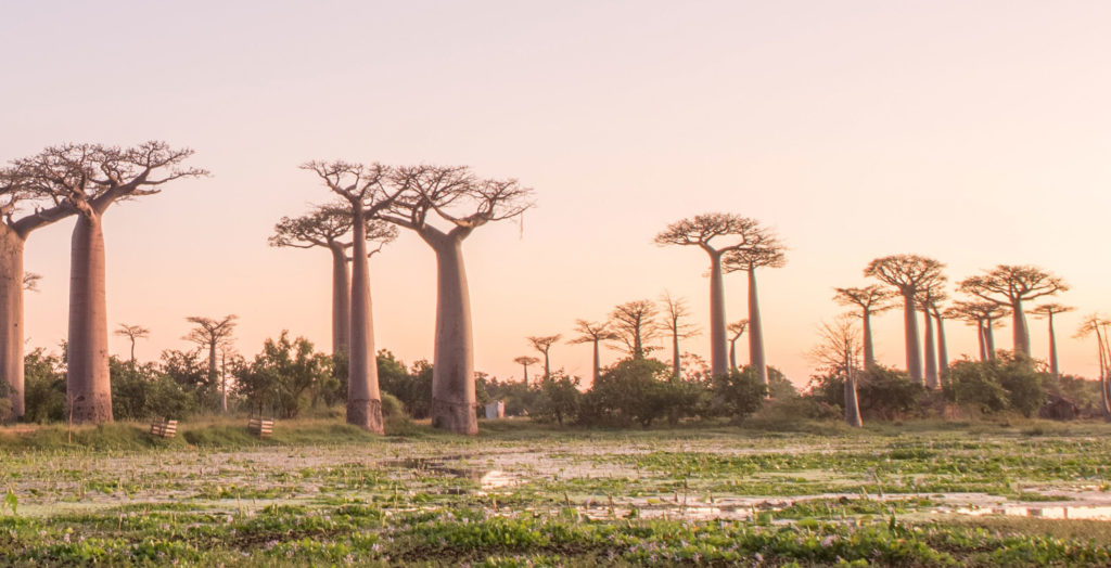 Baobab-Blog-Hero-Sunset