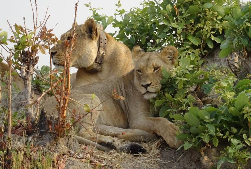 Cecil Blog Zimbabwe