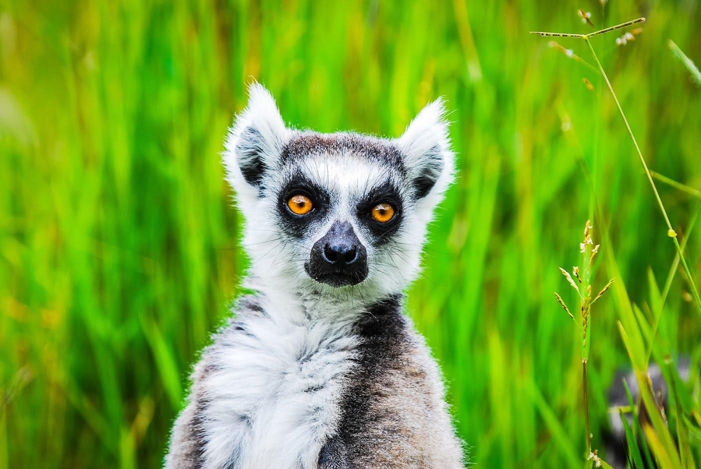 Vakona Forest Lodge Madagascar Wildlife