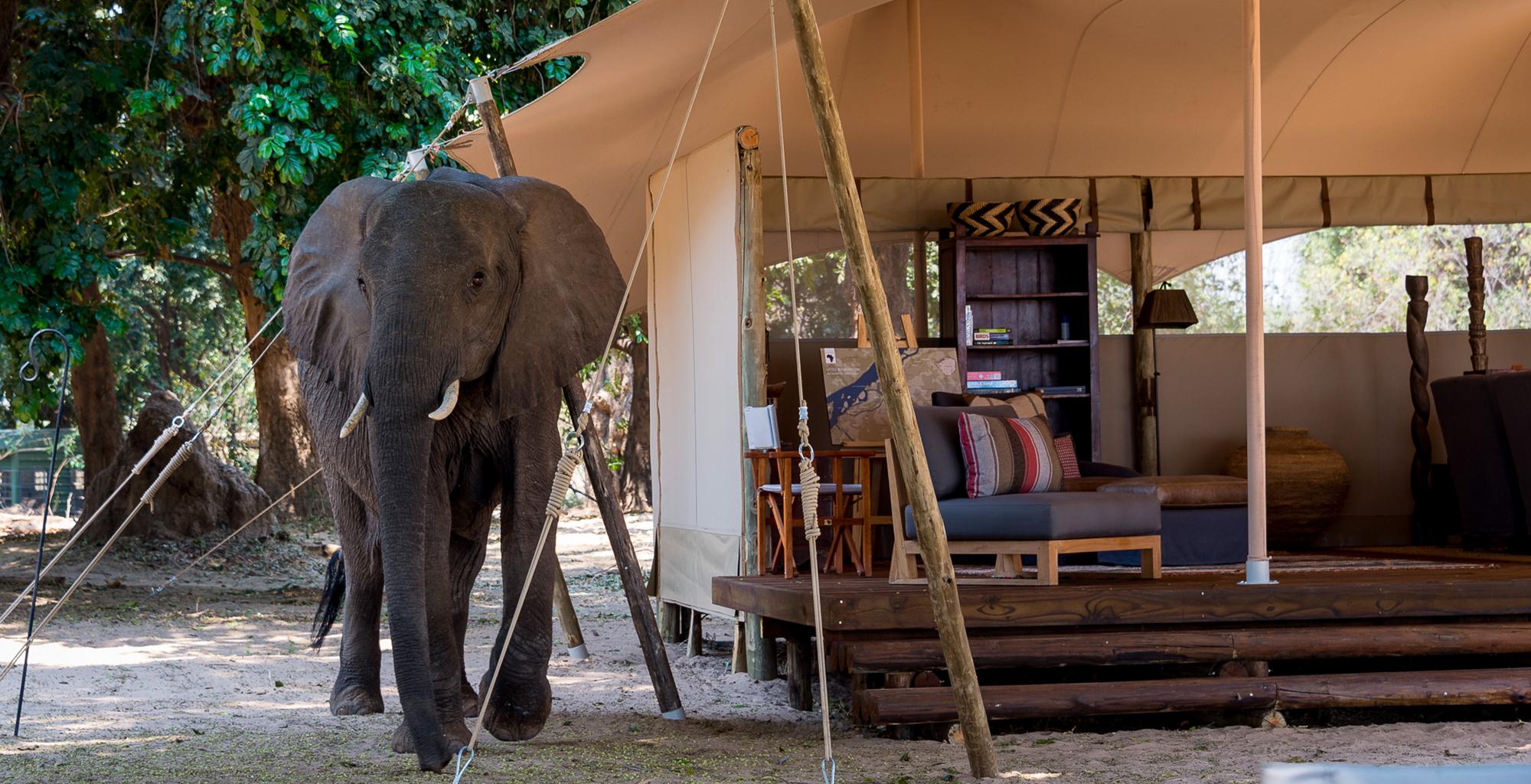 Zimbabwe-Little-Ruckomechi-Elephant-by-Camp