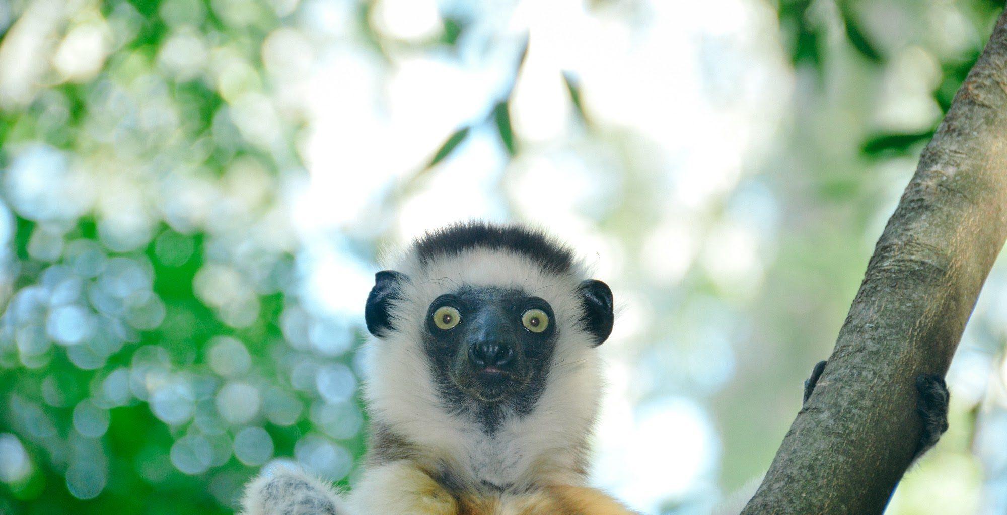 Madagascar South Wildlife