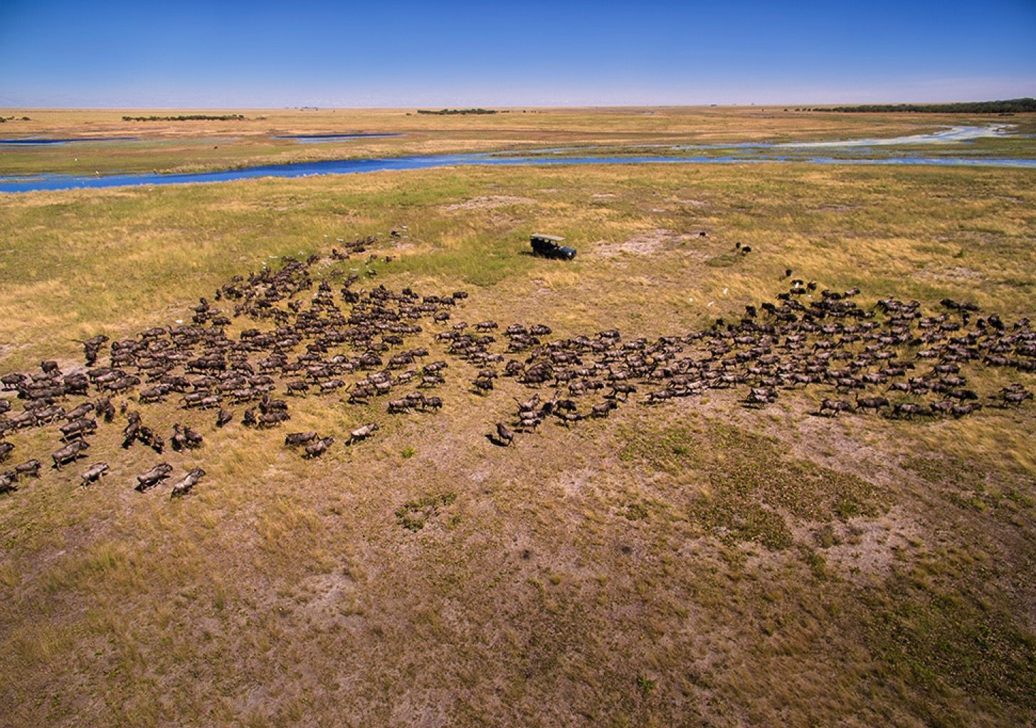Liuwa Plain National Park Zambia Buffalo Aerial