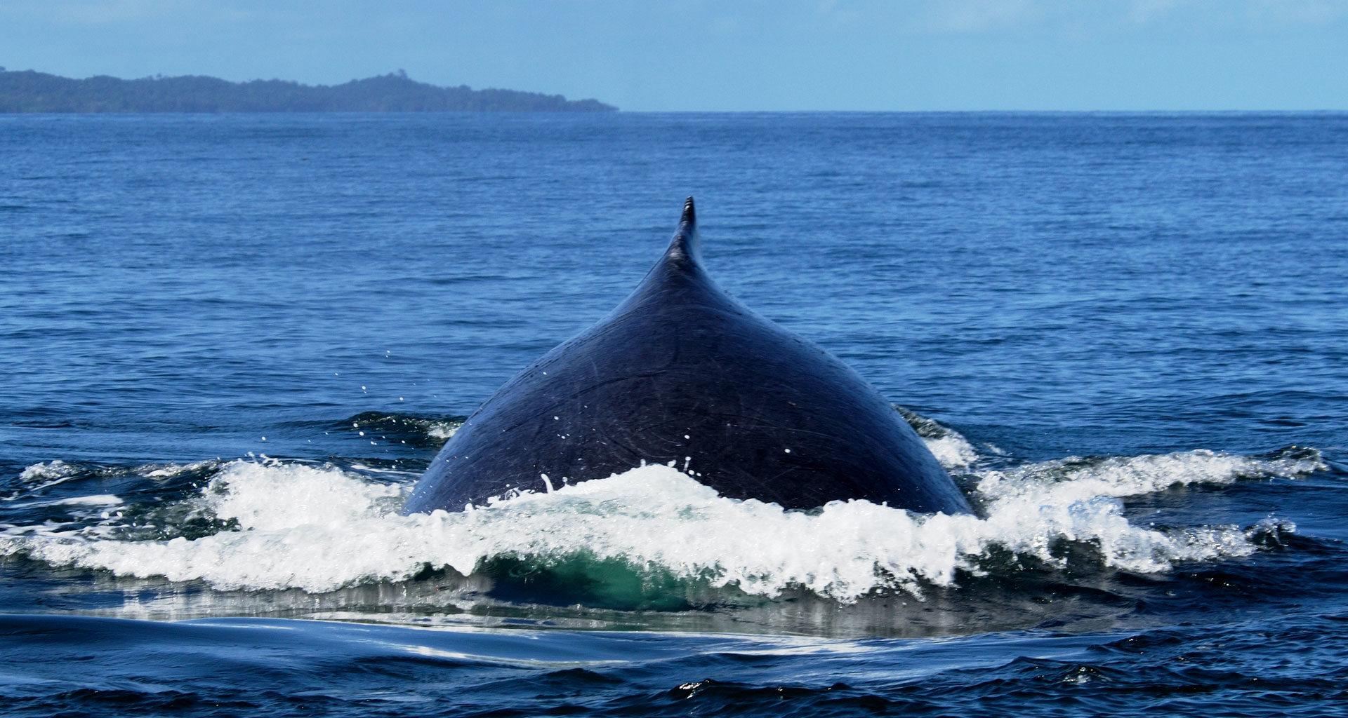 South-Madagascar-Sealife-Whale
