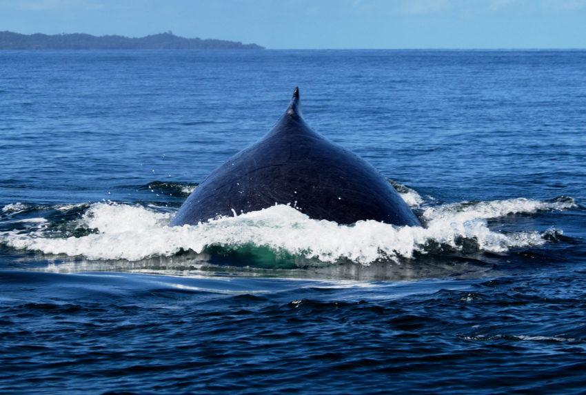 Whales-Madagascar East