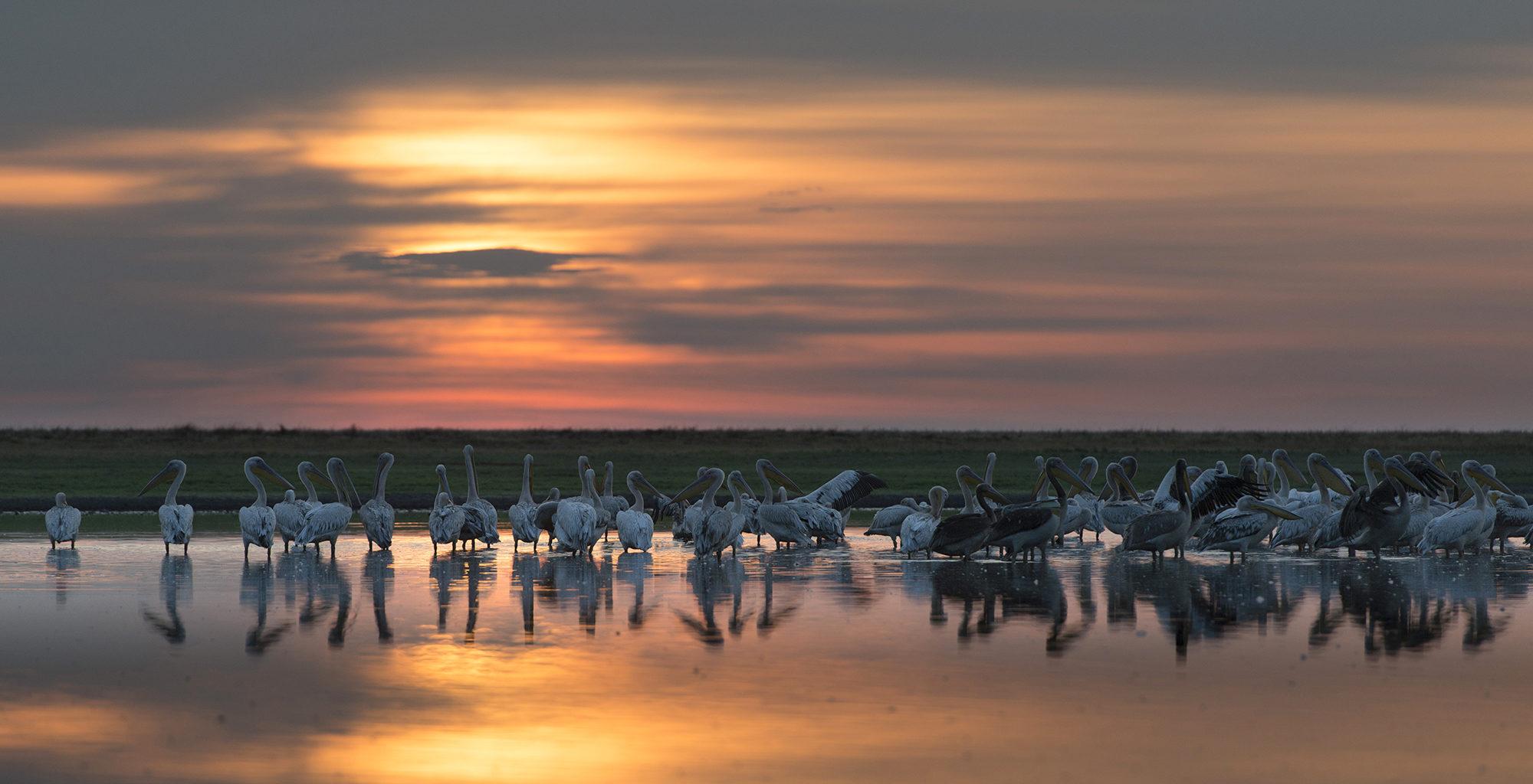 Zambia-Liuwa-Plain-Sunset