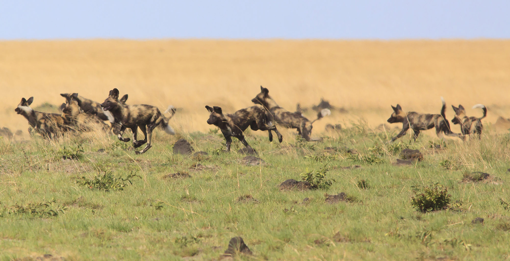 Zambia-Liuwa-Plain-Wildlife