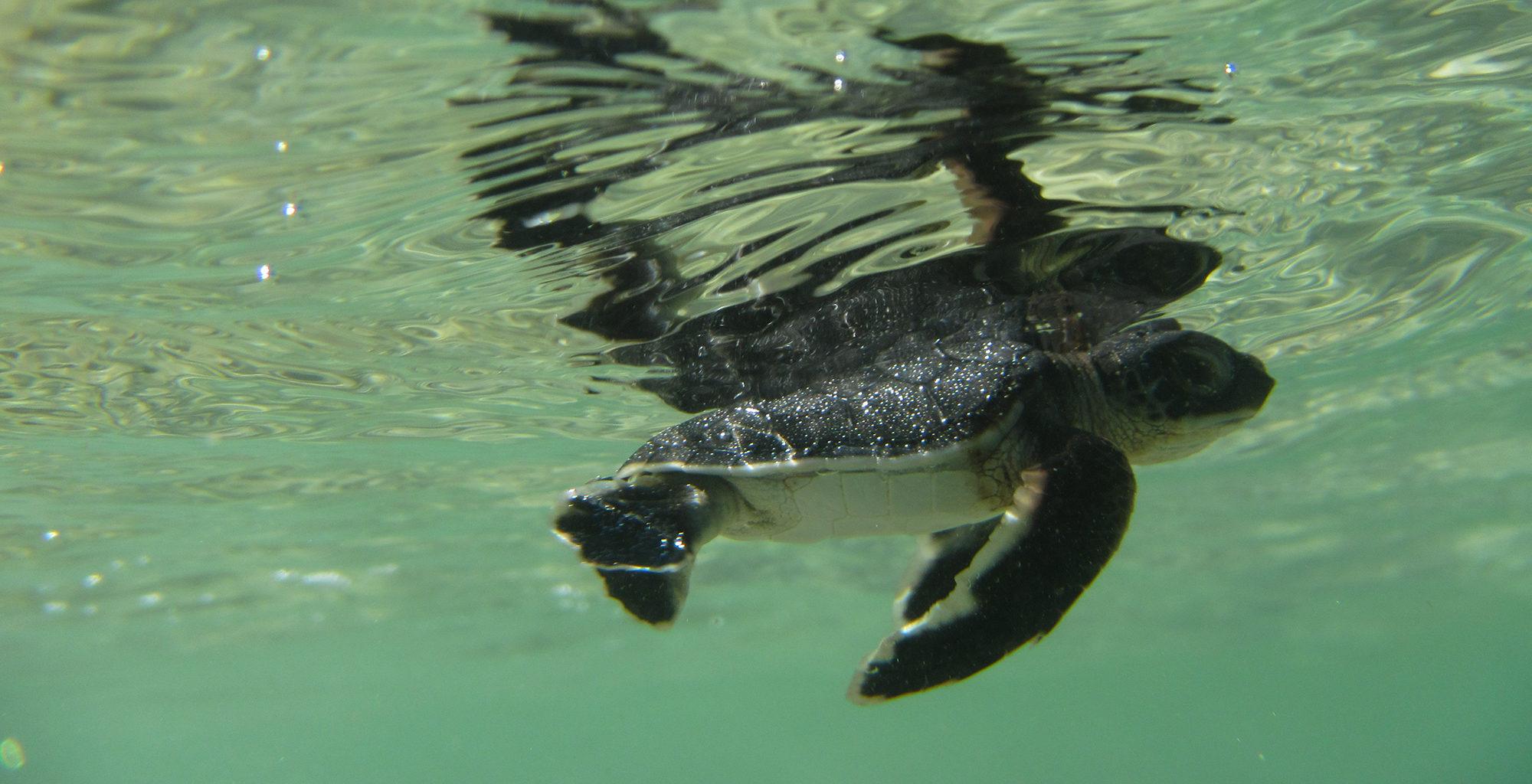 North-Madagascar-Wildlife-Turtle