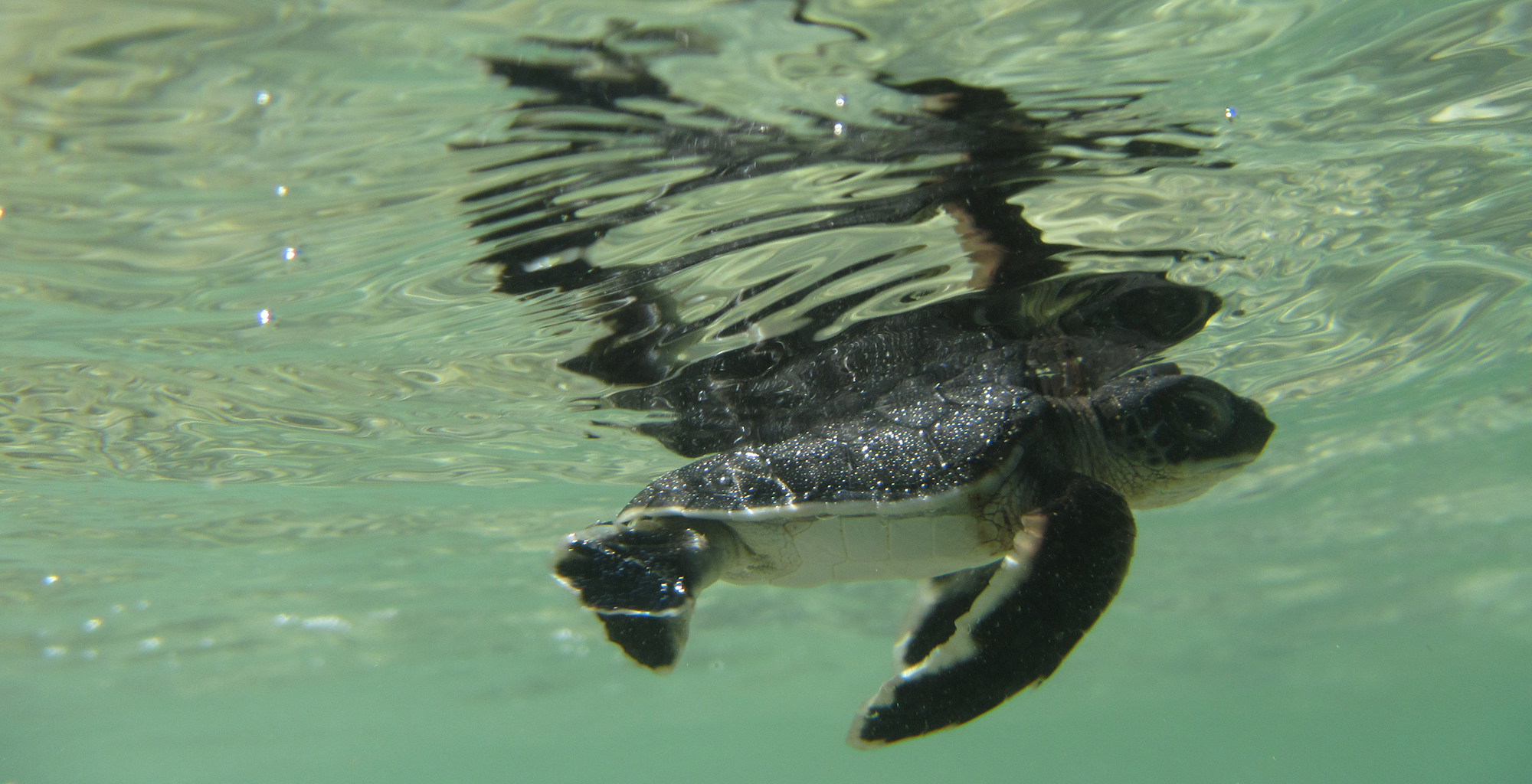 Madagascar-Time-and-Tide-Miavana-Turtle