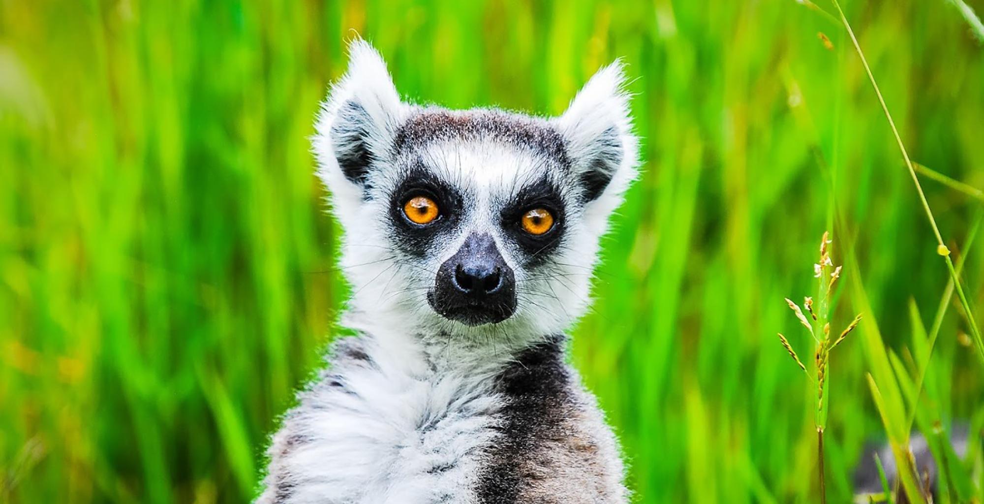 Madagascar-Vakona-Forest-Lodge-Wildlife