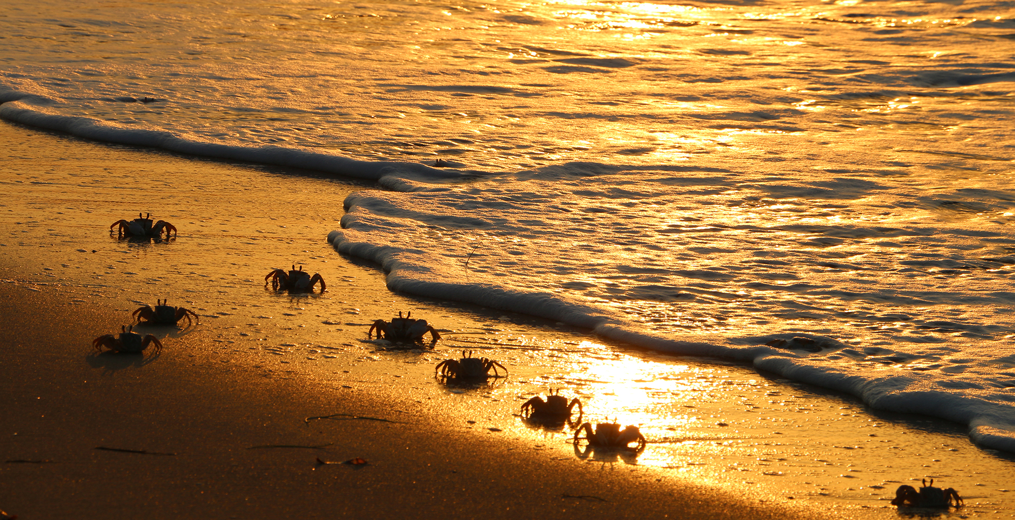 Madagascar-Anjajavy-Crabs-on-Beach