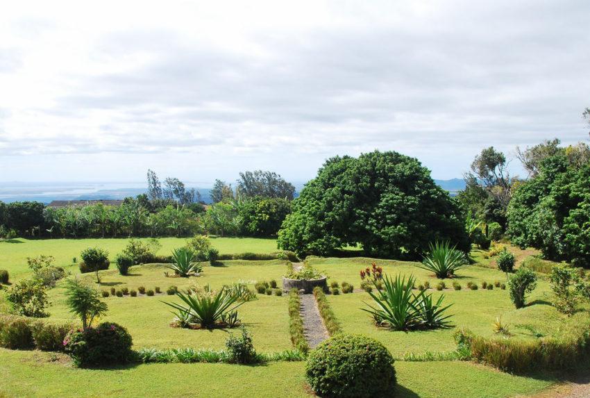 Litchi-Tree-Garden-North-Madagascar