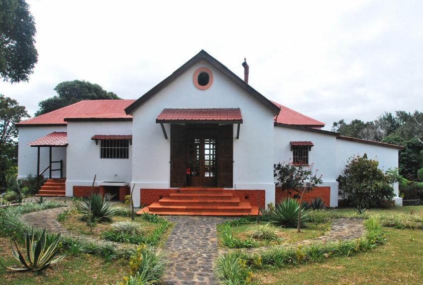 Litchi-Tree-North-Madagascar
