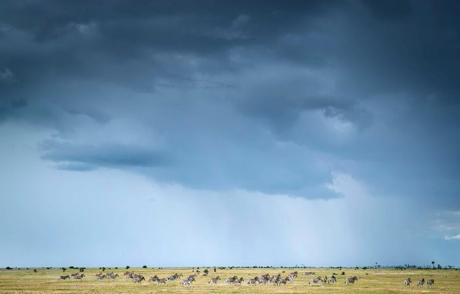 Zebras Magkadigkadi