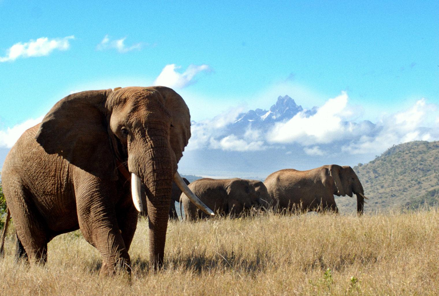 Watching Elephants Kenya
