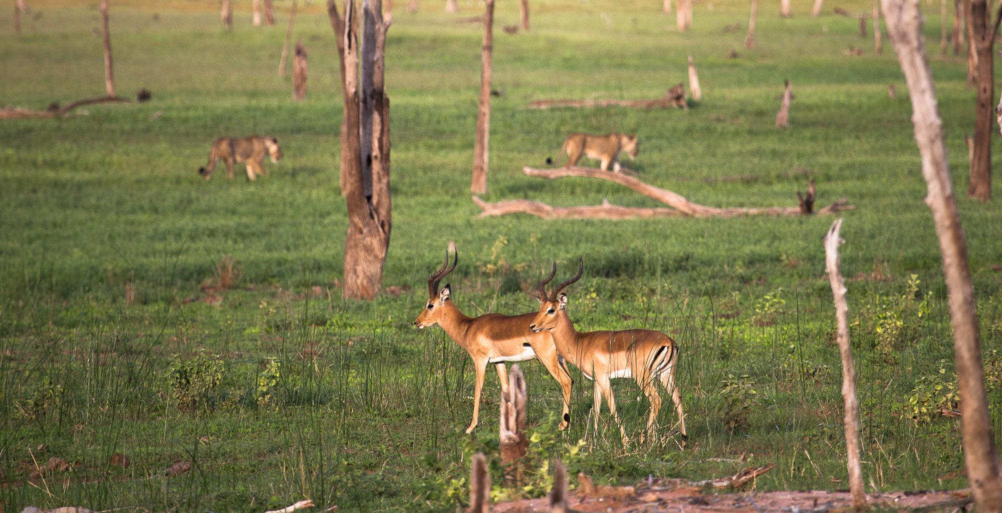 Zimbabwe-Lake-Kariba-Wildlife