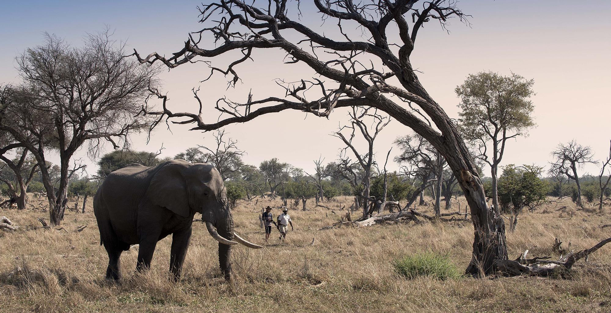 Botswana-Khwai-Bush-Elephant