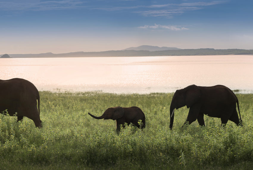Zimbabwe-Lake-Kariba-Wildlife-Elephants
