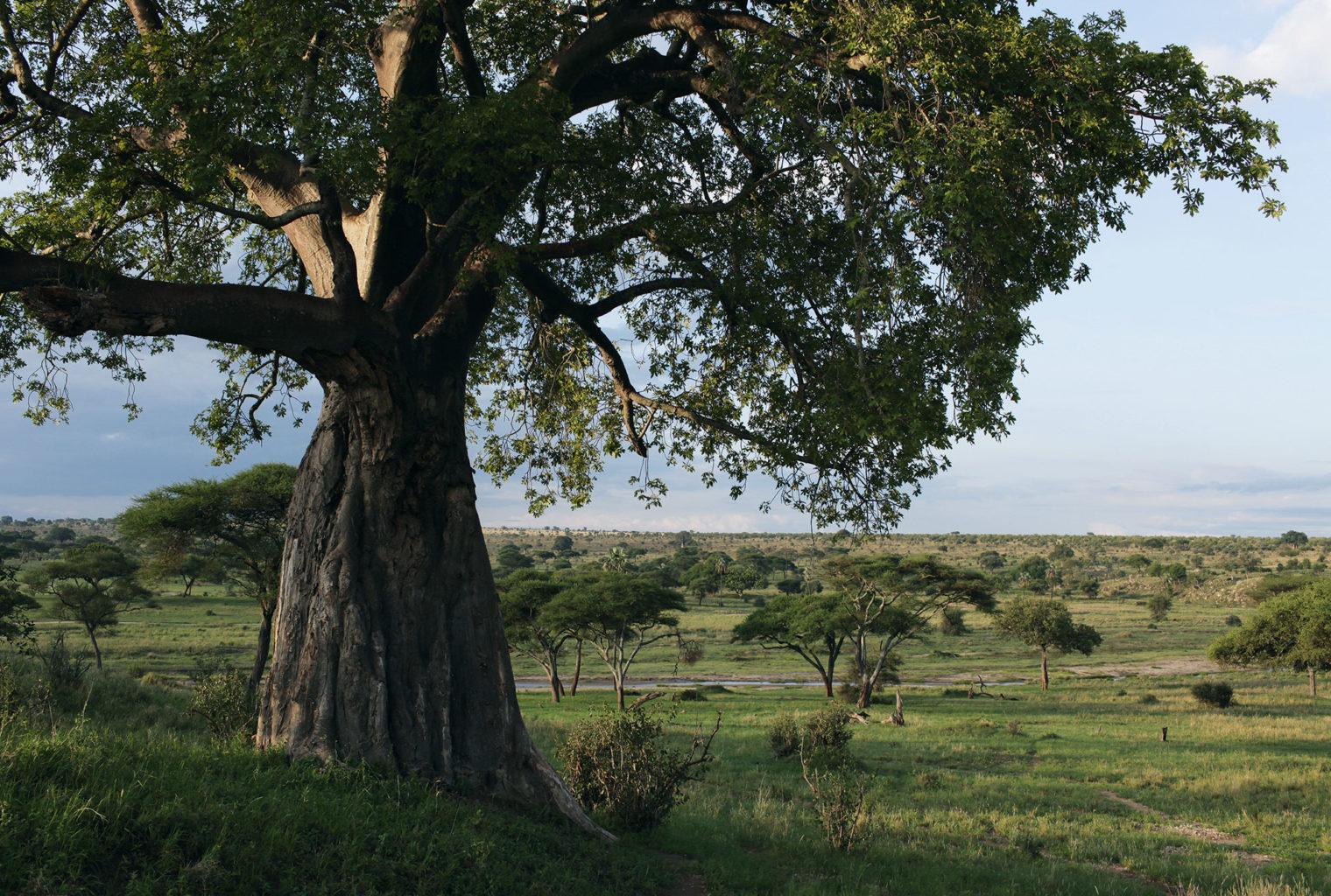 Big Wildlife Trek Tarangire
